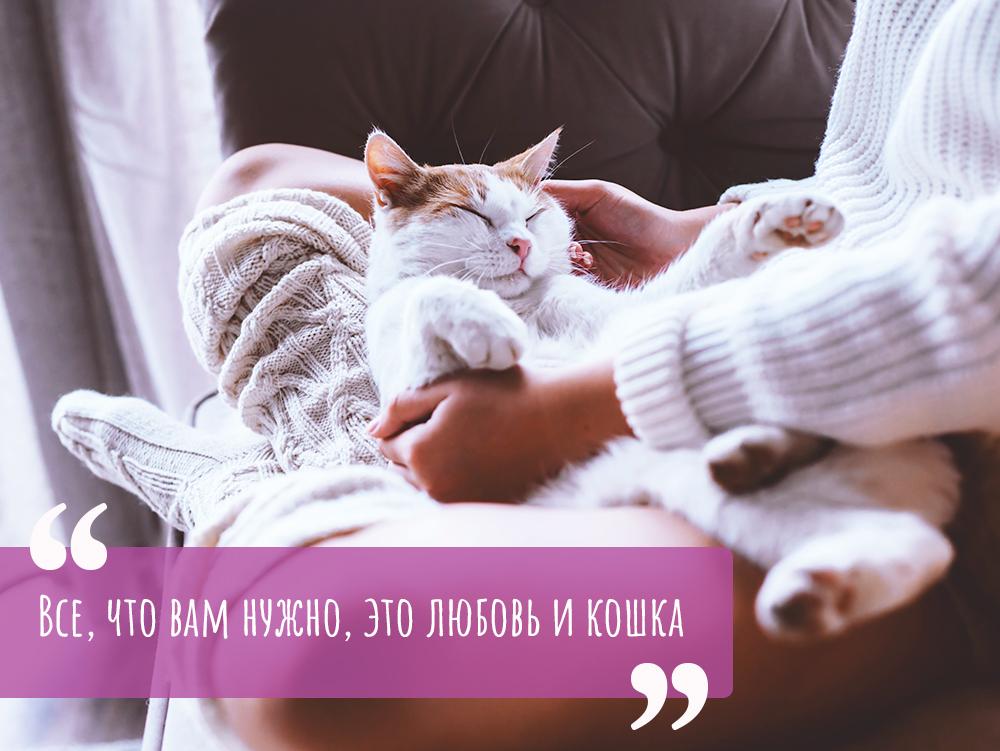 Цитаты про котиков
